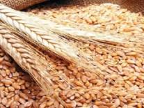 التموين:إحتياطي القمح يكفي حتى فبراير المقبل