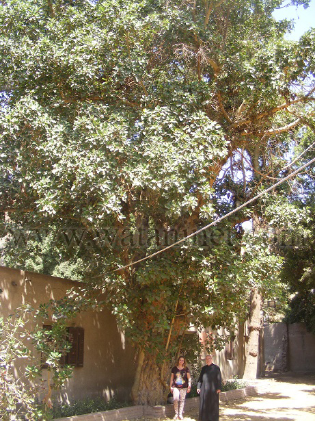 رقم 32  محررة وطنى والاب جورج  سليمان تحت  نسخة من شجرة مريم copy