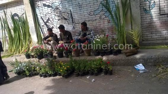 شوارع كنائس السويس تتزين بسعف النخيل واعواد القمح والورود  (4)